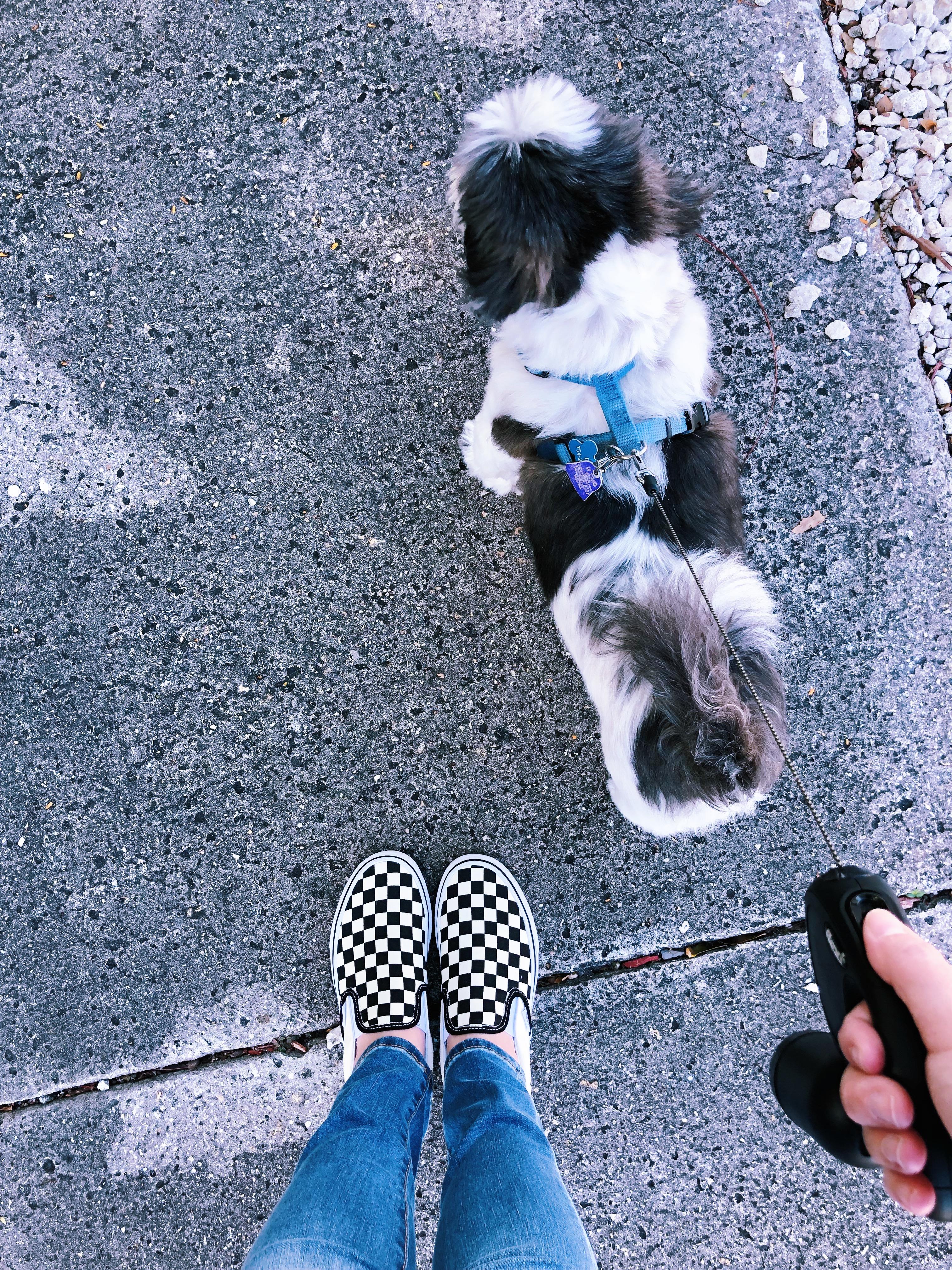 Novelty MONEY K3 FAKE 2-Shih Tzu Pet Dog Animal Dollar Bills Collectible